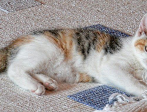 Jak przeciwdziałać marszczeniu się dywanów?